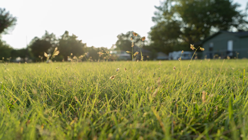 cover photo for devotions blog, grass with some flowers